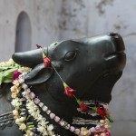 "Nandi Nandi or ( ""joyful"") or Nandikeshvara (the ""Lord of joy"") It is the vehicle (vâhana) of the god Śiva."