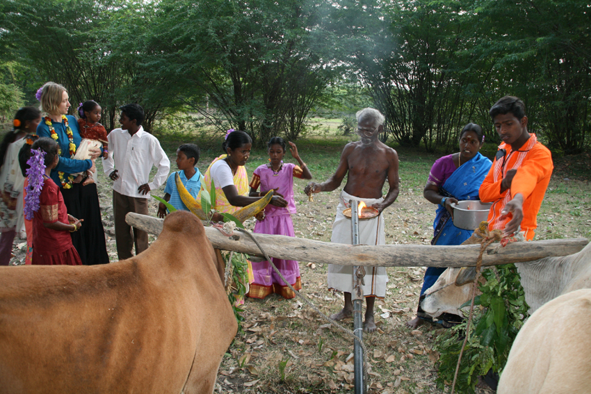 Pongal in Arul familly