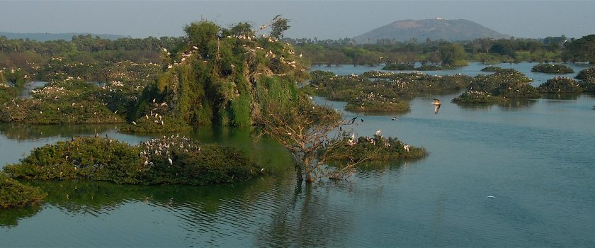 Vedanthankal Bird s Sanctuary_h