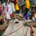 Pongal_Mahabalipuram_a