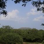 Vedanthankal Bird's Sanctuary_a2