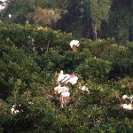 Vedanthankal Bird's Sanctuary_d