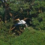 Vedanthankal Bird's Sanctuary_f