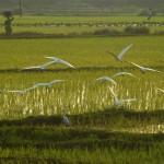 Vedanthankal Bird's Sanctuary_i