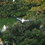 Vedanthankal Bird's Sanctuary_j