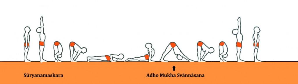 Ashtanga Yoga_Adho Mukha Svannasana _suryanamaskara_A