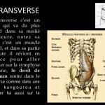 Ashtanga Yoga_Le transverse