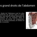 Ashtanga Yoga_Les grand droits de l'abdomen