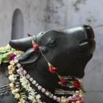 Nandi ou Nandin (« joyeux ») ou encore Nandikeshvara (le « seigneur de la joie ») Il est le véhicule du dieu Śiva.