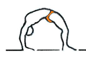 Ashtanga Yoga Bruxelles_posture Arcs