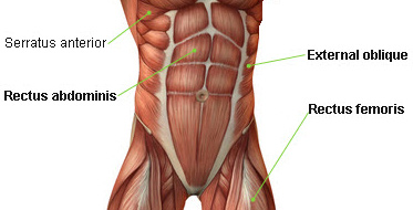 ab-muscles