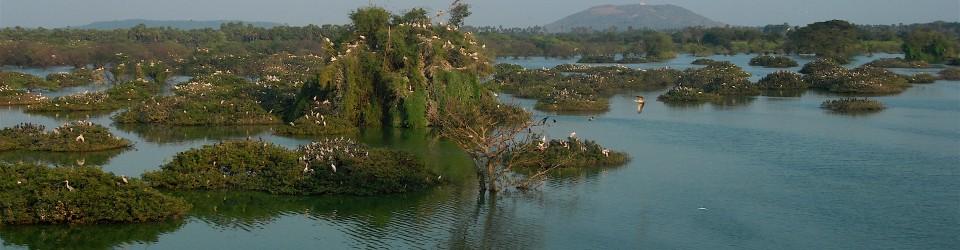 Vedanthangal Bird Sanctuary (ornithological sanctuary)