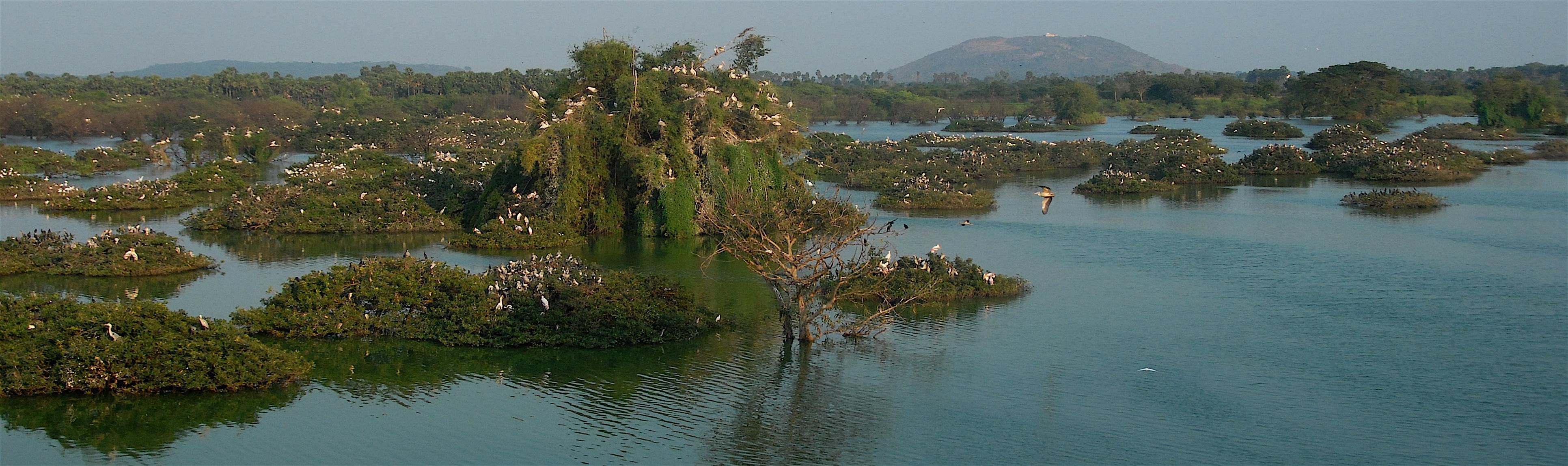 Vedanthankal Bird's Sanctuary_h